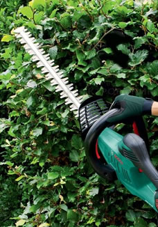 Hedge Trimming in London